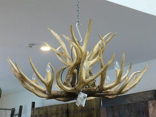 deer antler chandelier new zealand best deer photos water alliance org